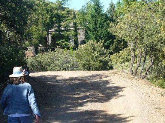 Cortijo Prado Toro: A first glimpse of Prado Toro through the trees