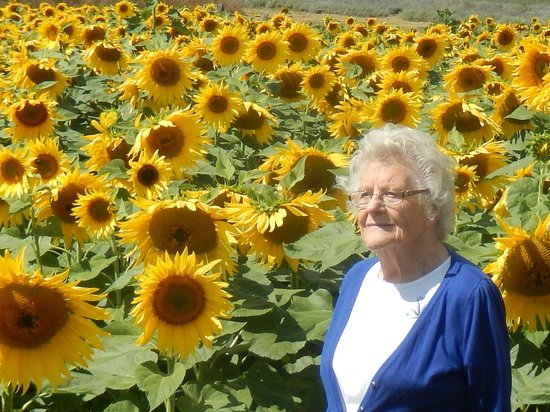 Hitchin Lavender: Mother amongst the sunflowers!