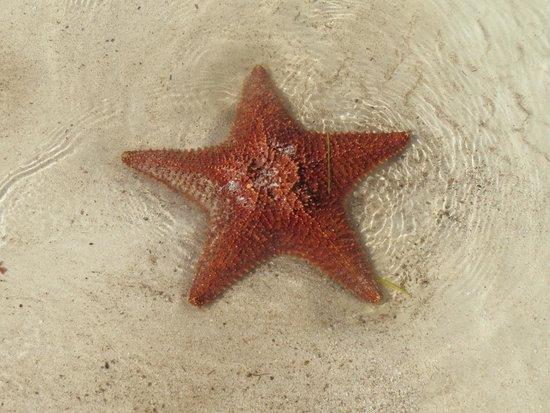 Melia Buenavista : étoile de mer