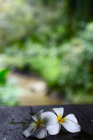Maya Ubud Resort & Spa: flower bath