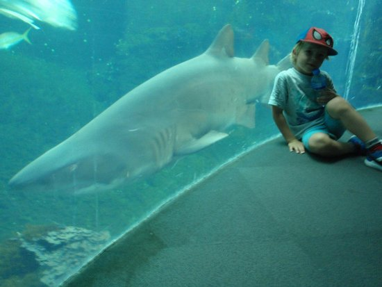 Nausicaa, Centre National de la Mer : Shark tank