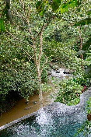 Maya Ubud Resort & Spa: View From Restaurant
