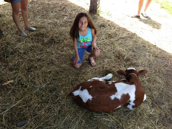Living History Farms: Cow Milking