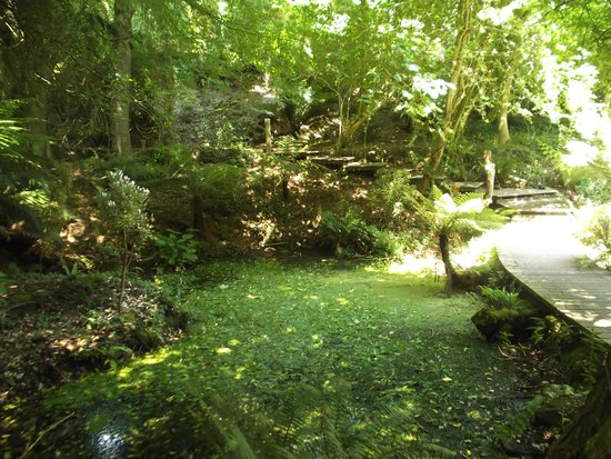 Tremenheere Sculpture Gardens: The Woodland Glade
