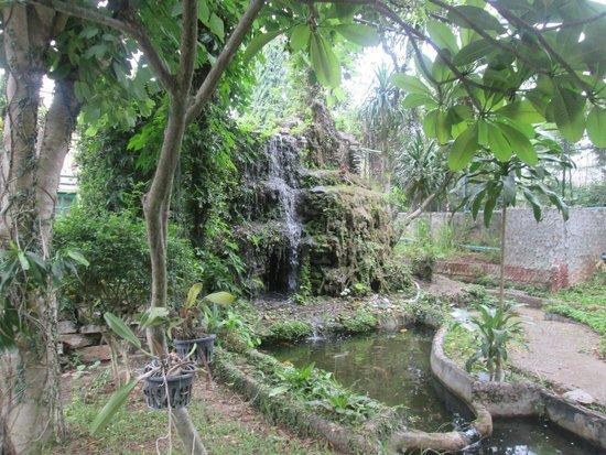 Khao Yai Garden Lodge : hotel garden