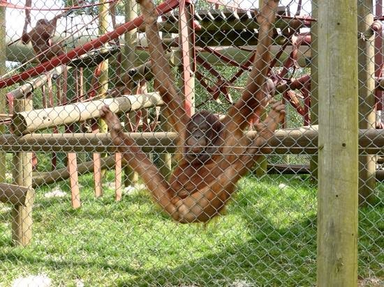 Monkey World: veyr dignified, lol