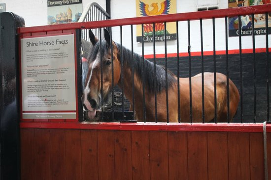 The National Brewery Centre: one of the horses