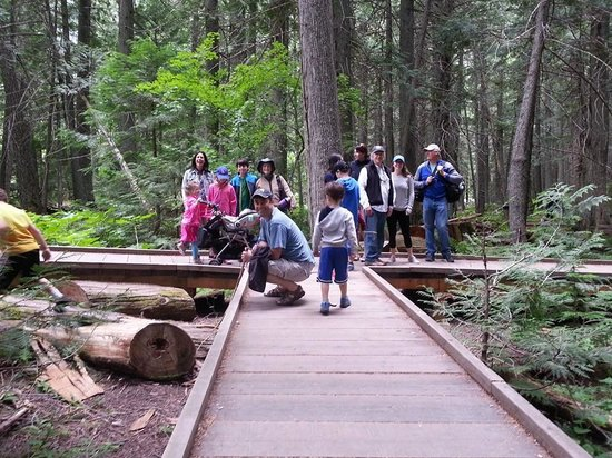 Historic Tamarack Lodge : Easy walk for entire family at Trail of the Cedars in Glacier