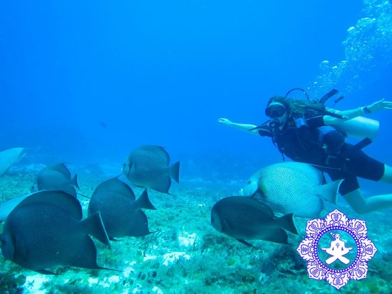 NIrvana Diving School: girl and french angel fish