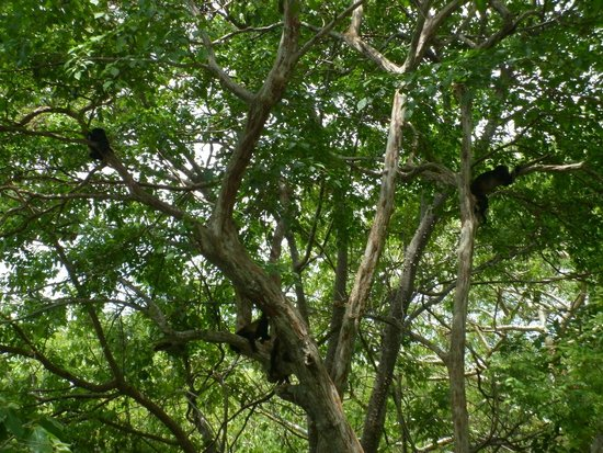 Andaz Peninsula Papagayo Resort : Congos