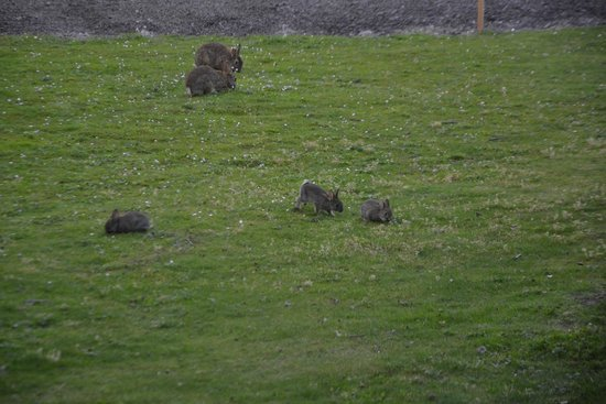 Hotel Ibis Schiphol Amsterdam Airport : Lovely rabbit family in the hotel yard