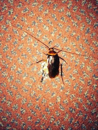 BEST WESTERN Hotel Le Montmartre Saint Pierre: karaluch u dzieci w pokoju br...