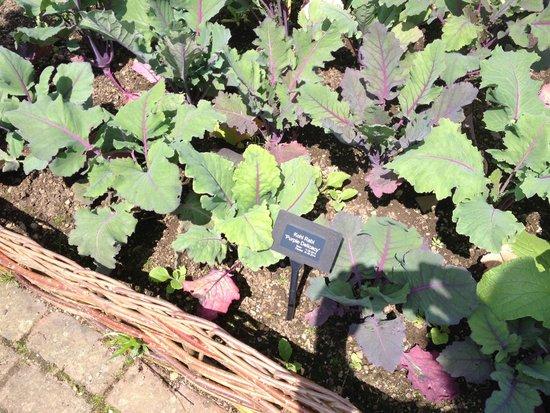 RHS Garden Rosemoor: Vegetable garden area