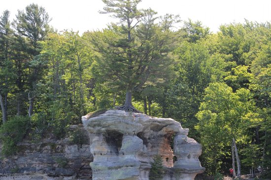 Pictured Rocks National Lakeshore: Tree whose roots connect to the mainland.