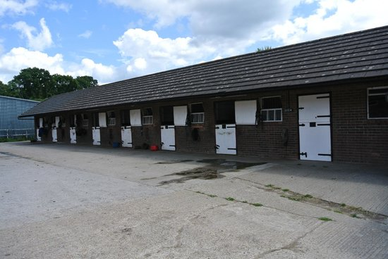Arniss Equestrian: Horse Stable