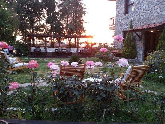 Mandarin & Mango Boutique Hotels: The garden at sunset.
