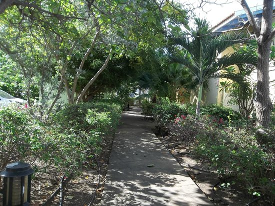Kura Hulanda Lodge & Beach Club: Walkway
