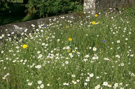 Oatfield Country House B&B: The walled garden is planted as a wildflower meadow