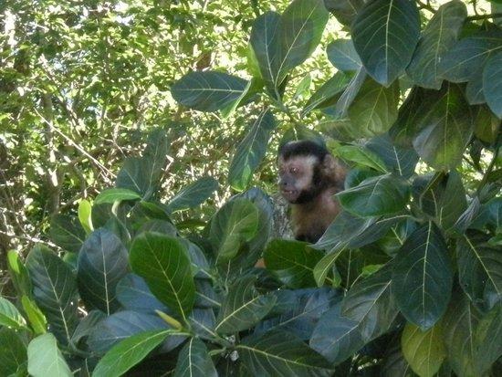 Manu Peclat - Rio Tour Guide: Vitor's favourite - monkeys!