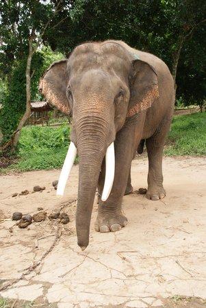Guesthouse Liam's Suan Dok Mai : Baan Chang elefantpark