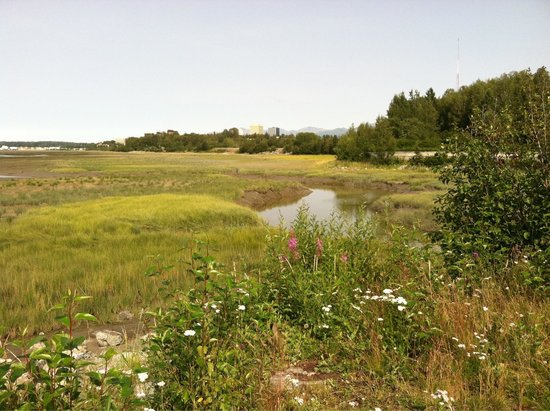 Tony Knowles Coastal Trail: Beautiful view of anchorage from trail