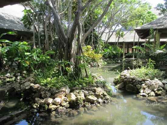 Iberostar Bavaro Suites: Pond