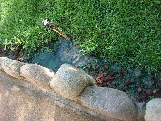 Grand Palladium Vallarta Resort & Spa : Agua podrida en variaz zonas, que hace un hedor molesto.