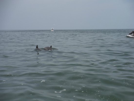 Great White Water Sports: Some of the many dolphins we saw.
