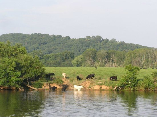 Blue Moon Cruises: Cattle grazing on an island in the middle of the river.  You see a bit of everything along this