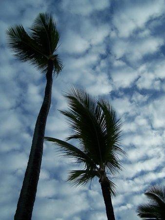 Excellence Punta Cana: HERMOSO