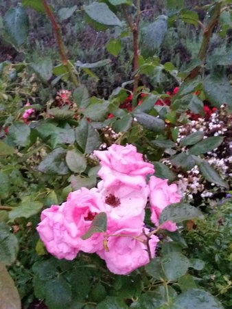 Chateau de Rilly: Flowers on property