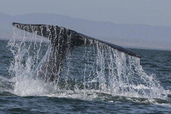 Loreto Bay National Marine Park: Blue Whale