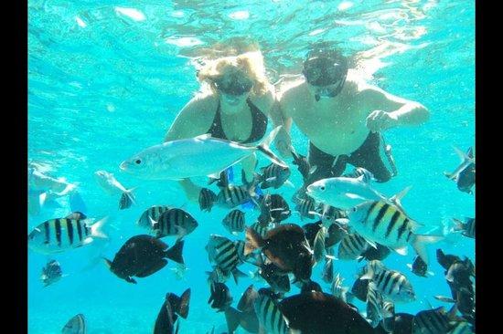 Occidental at  Xcaret Destination: Snorkeling