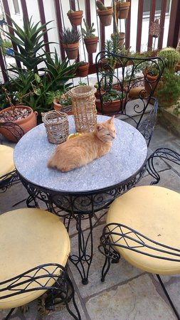 Hotel Mato : Cat on a Coffe/Brekfast Table