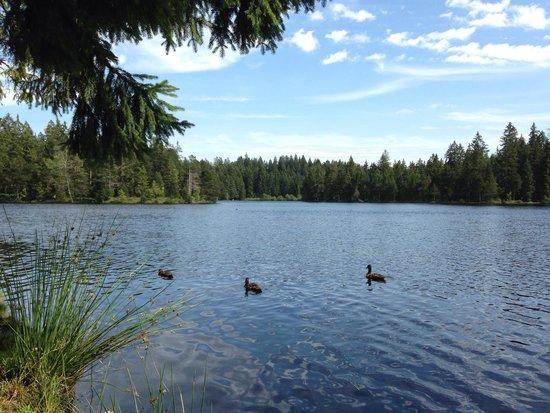 Etang de la Gruère : Ducks
