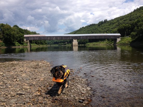 North Star Canoe & Kayak - Day Tours: Doggy Day