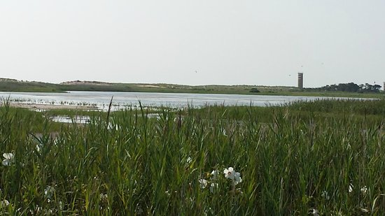 Gordons Pond: View from Trail