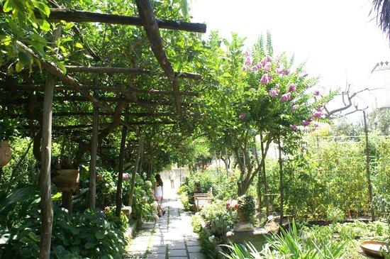 Hotel Palazzo Murat : The Garden