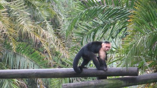 Palm Beach Zoo & Conservation Society: Monkey
