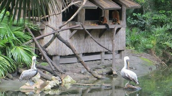 Palm Beach Zoo & Conservation Society: Lemurs and Pelicans
