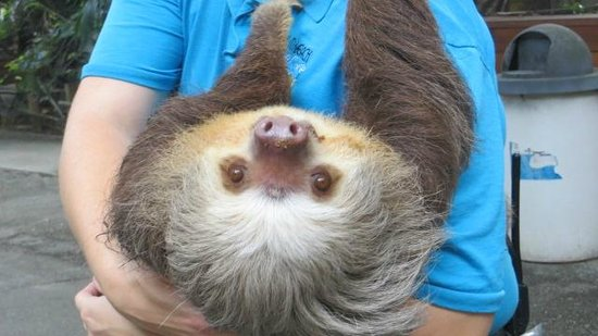 Palm Beach Zoo & Conservation Society : keeper walking around with sloth