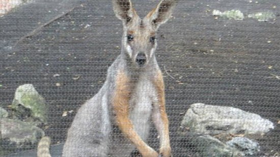 Palm Beach Zoo & Conservation Society: Wallaby