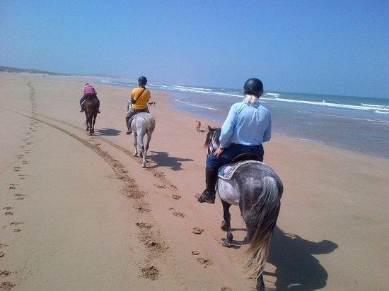 Equi Evasion: Miles of beach