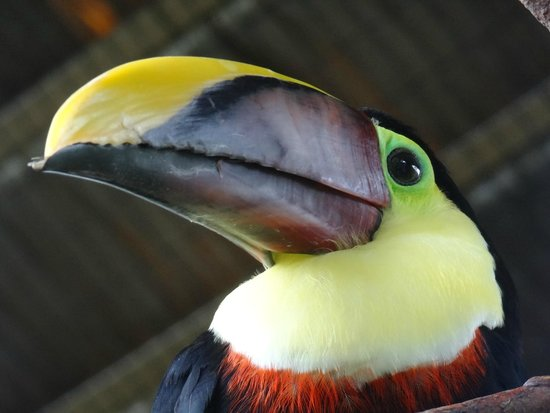 La Paz Waterfall Gardens: toucan