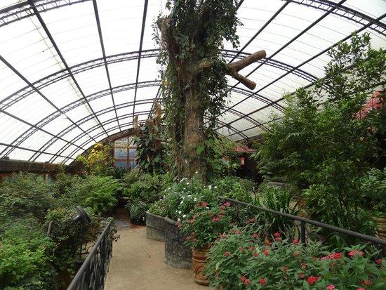 La Paz Waterfall Gardens: papillon cage