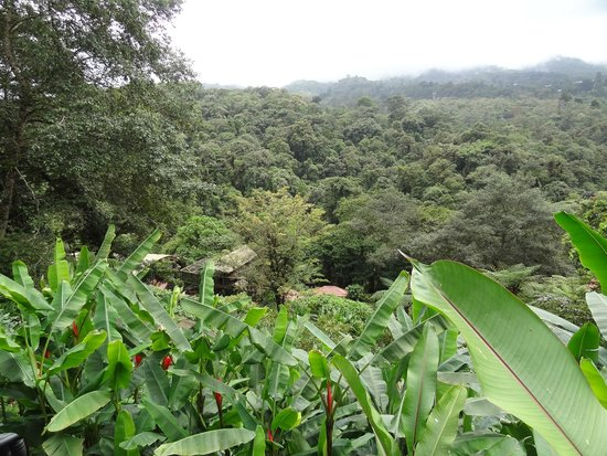 La Paz Waterfall Gardens: domaine