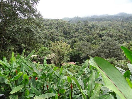Naturschutzgebiet La Paz Waterfall Gardens: domaine