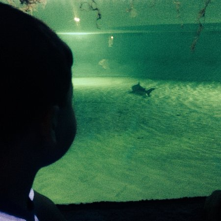 Branson's Wild World: Here's the one shark, sitting in the bottom of the tank