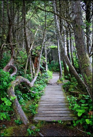 Port Renfrew, Canada: The trail to the beach