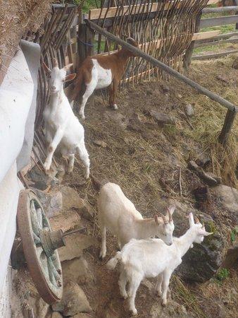 Polvljana, Kroatien: Goat pen
